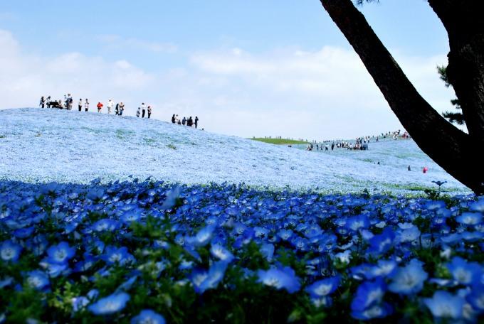 H25.04.26 ひたち海浜公園  (58).jpg