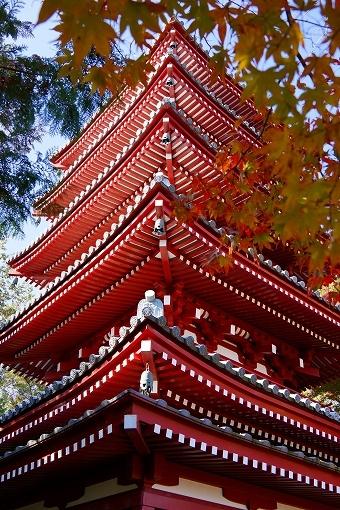 H26.11.27 本土寺の紅葉  (85).jpg