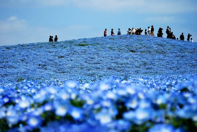 H25.04.26 ひたち海浜公園  (51).jpg