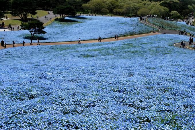 H25.04.26 ひたち海浜公園  (96).jpg