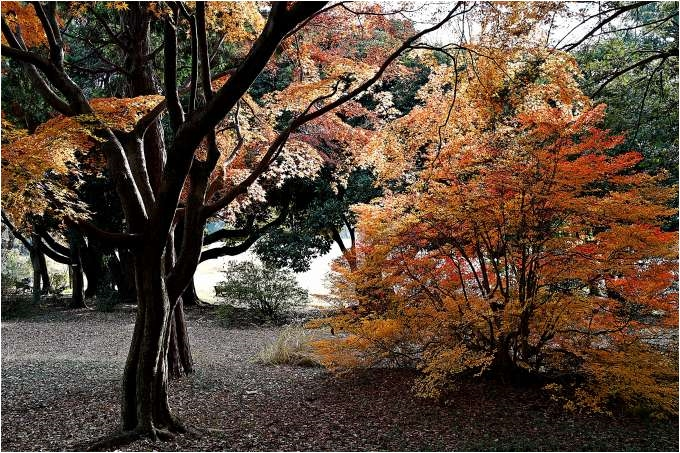 H28.12.04 所沢航空記念公園  (8).jpg